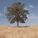 درختی تنها در همسایگی
